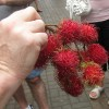 Rambutan - exotic fruit from Chinatown