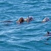 This was a big pod (~50) of Spinner Dolphins